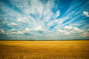 agriculture-blue-sky-clouds-1227513